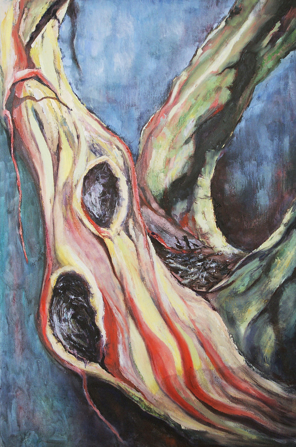 snow-gum-oil-on-canvas-50cm-x-76cm